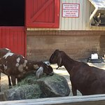 Foto van Riverbanks Zoo and Botanical Garden
