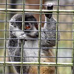 Foto de Duke Lemur Center