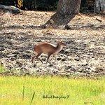 Zdjęcie Wilpattu National Park