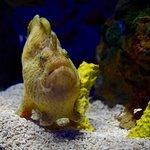 ภาพถ่ายของ Ripley's Aquarium of the Smokies