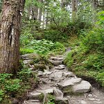 Well maintained trail, but lots of stairs, roots, and uneven surfaces.