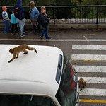 ภาพถ่ายของ Gibraltar Taxi Association