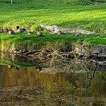 Zdjęcie Tullynally Castle & Gardens