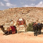 Фотография Petra Nights Tours Jordan