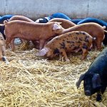 Wimpole Home Farm照片