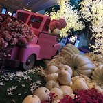 Fall flowers for Breast Cancer at the Beau
