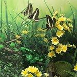Zdjęcie Konya Tropical Butterfly Garden