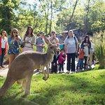 Bilde fra Nashville Zoo