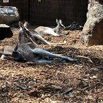 ภาพถ่ายของ Taronga Zoo