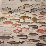 tipos de peixes