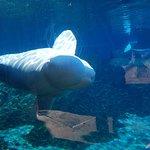 Φωτογραφία: Mystic Aquarium