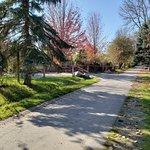 Flamingos and pathways