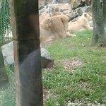 foto do zoologico