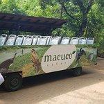 Foto de Macuco Safari