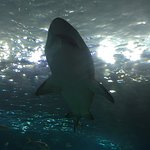 Photo of Ripley's Aquarium Of Canada