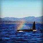 Foto van SpringTide Whale Watching & Charters