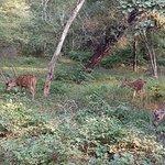 صورة فوتوغرافية لـ Ranthambore National Park