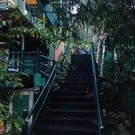 Bamboo Dale Bild