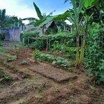Landscape - Jaga Food Photo