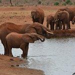 Ảnh về Giornale Kenya Safari - Day Tours