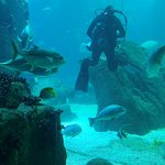 Φωτογραφία: Lisbon Oceanarium
