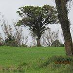 صورة فوتوغرافية لـ Ambewela Farms