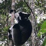 Foto de Andasibe-Mantadia National Park  (Reserve of Perinet)