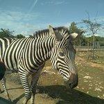 Bilde fra Safari Zoo
