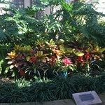 ภาพถ่ายของ Botanical Building and Lily Pond
