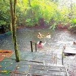 Toku rainforest tour , hot springs
