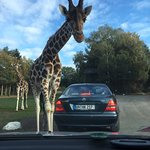 Photo de Serengeti-Park Hodenhagen