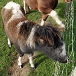 Foto de Cardigan Island Coastal Farm Park