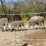 Foto de Szeged Zoo