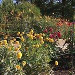 Bild från Parc Floral de Paris