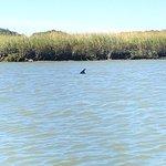 Flipper Finders Boat & Sea Kayak Tour Co.의 사진