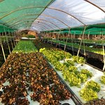 A veggie farm