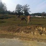 Photo de Safari Park