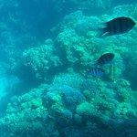 Фотография Sharm Wonders - Day Tours
