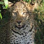 Olare Mara Kempinski Masai Mara Photo