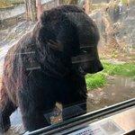 Photo of Noboribetsu Bear Park