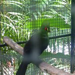 Phuket Bird Parkの写真