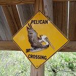 Foto de Florida Keys Wild Bird Rehabilitation Center