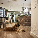 A cafe with relaxed atmosphere and friendly animals