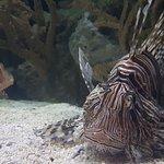 Photo of Shark Reef