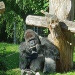 Φωτογραφία: Burgers' Zoo and Safaripark