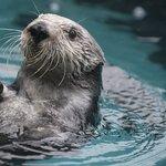 Oregon Coast Aquarium Foto