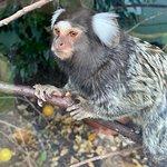 Foto de Auchingarrich Wildlife Centre