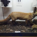 ภาพถ่ายของ National Museum of Agriculture - Ohrada  Forestry, Game-Keeping, Fisheries