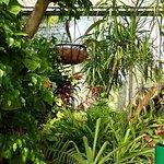 inside the butterfly farm