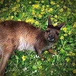 Foto de Kangaroo Island Wildlife Park
